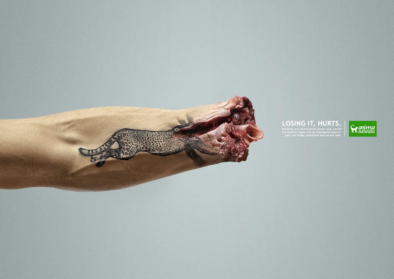 AnimaNaturalis-hurt-wildlife-1